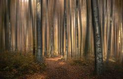 Лес VI сказа стоковая фотография rf