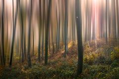 Лес VII сказа стоковые фото