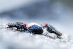 Летает насекомое Стоковое Фото