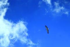 Летание аиста в голубом небе Стоковое Изображение