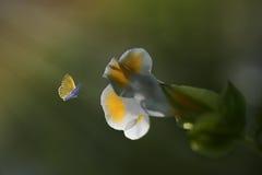 Летание бабочки крупного плана желтое Стоковое Фото