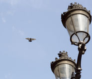 Летание голубя уличными светами Стоковые Изображения