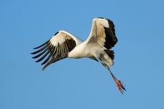 Летание деревянного аиста в голубом небе Стоковые Изображения RF