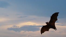 Летание летучей мыши стоковые фотографии rf