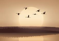 Летание крана на заходе солнца Стоковые Изображения RF