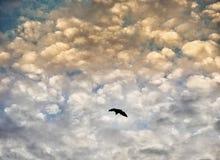 Летание летучей мыши под драматическими небесами стоковая фотография
