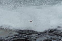 Летание маленького egret стоковые изображения