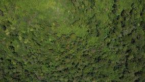 Летание над деревьями акции видеоматериалы