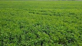 Летание над зеленым полем дел видеоматериал