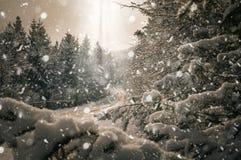 Летание над снежным ландшафтом стоковая фотография