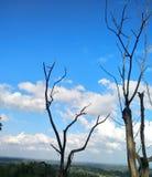Летание облаков стоковое изображение