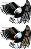 летание орла Стоковое фото RF