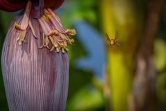 Летание оси для бананового дерева стоковые фото