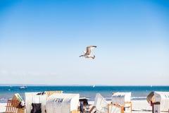 летание пляжа над чайкой стоковое фото