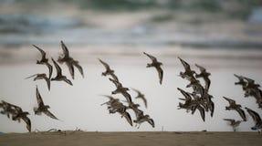 Летание пляжа Стоковая Фотография