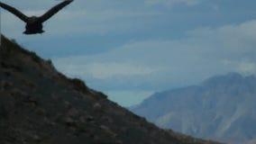 Летание попугая в горах стоковая фотография