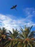 Летание попугая против неба Стоковые Изображения RF