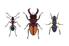 Летание природы значка насекомого изолированное квартирой прослушивает муравья жука и кузнечика паука живой природы или животного Стоковое Изображение RF