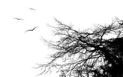 летание птицы вокруг ветви дерева, EPS10 Стоковые Изображения RF