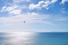 Летание птицы в голубом небе на прибрежном взгляде во время захода солнца с отражением света солнца на море Стоковая Фотография RF