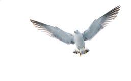 Летание птицы в небе стоковое изображение
