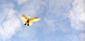 Летание птицы голубя животная смешная тема щенка травы Стоковая Фотография RF