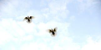 Летание птицы голубя животная смешная тема щенка травы Стоковое фото RF