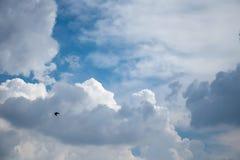 Летание птицы на голубом небе Стоковое фото RF