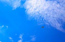 Летание птицы над облаками на голубом небе Стоковое Фото