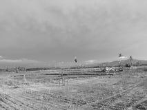 Летание птицы на озере Стоковое Фото
