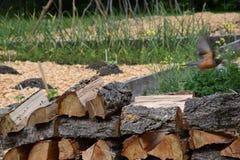 Летание птицы от кучи вносит дальше Британскую Колумбию в журнал, Канаду стоковое фото