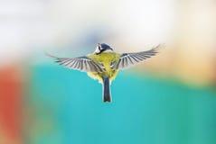 Летание птицы при свои протягиванные крыла стоковая фотография rf