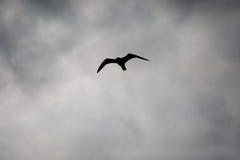 Летание птицы силуэта на небе Стоковые Изображения RF