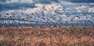 Летание птицы с морем стоковое изображение