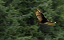 Летание птицы через деревья стоковое фото rf