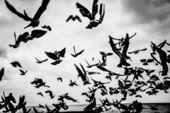 Летание птиц голубей в голубом небе стоковые изображения rf