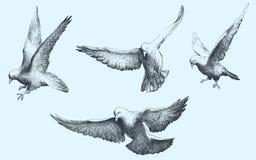 Летание птиц голубей Watercolour, установило чертежа вектора Полет птиц иллюстрация вектора