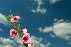 летание пчелы Стоковое фото RF