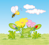 Летание пчелы вокруг цветков Стоковое фото RF