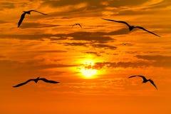 Летание силуэта птицы Стоковые Изображения