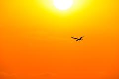 Летание силуэта птицы Стоковая Фотография RF