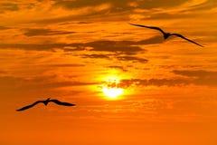 Летание силуэта птицы Стоковые Фото