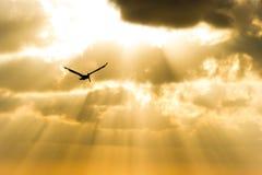 Летание силуэта птицы Стоковое фото RF
