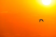 Летание силуэта птицы Стоковые Изображения RF