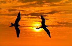 Летание силуэта птицы Стоковое Фото