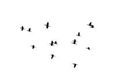 Летание силуэта птиц стада на белой предпосылке стоковая фотография rf