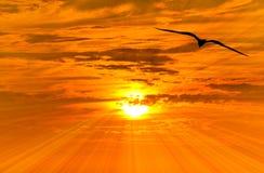 Летание силуэта свободы птицы Стоковые Фото