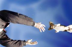 летание собаки Стоковая Фотография RF
