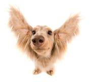 летание собаки Стоковое фото RF
