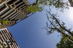 Летание трутня в небе стоковые изображения rf